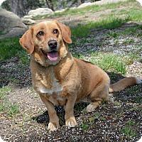 Adopt A Pet :: Rogue - Mountain Center, CA