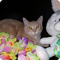 Adopt A Pet :: Wesson - Albemarle, NC