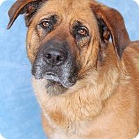 Adopt A Pet :: Milana - Encinitas, CA