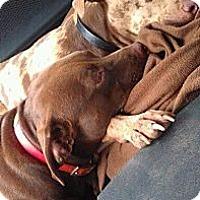 Adopt A Pet :: *TY & COCO - Winder, GA