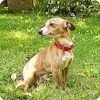 Adopt A Pet :: Nikon - Mocksville, NC