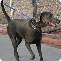 Adopt A Pet :: Stardust - Phoenix, AZ