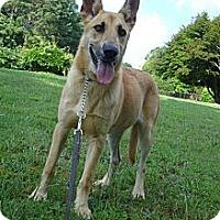 Adopt A Pet :: SUMMER - ROCKMART, GA