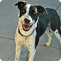 Adopt A Pet :: Penny - Cheyenne, WY