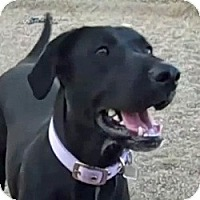 Adopt A Pet :: Summer - Scottsdale, AZ