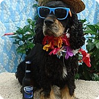 Adopt A Pet :: Murphy - Sugarland, TX