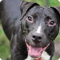 Adopt A Pet :: Jill - Tinton Falls, NJ
