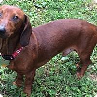 Adopt A Pet :: Parker - Georgetown, KY