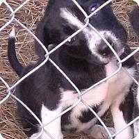 Adopt A Pet :: Millie - Waller, TX