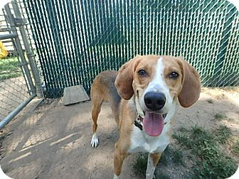 Hound (Unknown Type) Mix Dog for adoption in Peace Dale, Rhode Island - Cooper