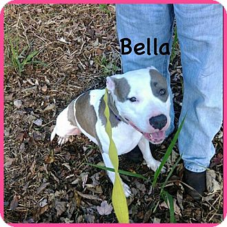 American Staffordshire Terrier Mix Dog for adoption in Matawan, New Jersey - Tinkerbella