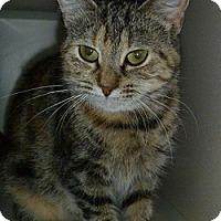 Adopt A Pet :: Nala - Hamburg, NY