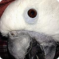 Adopt A Pet :: Aspen - Lenexa, KS