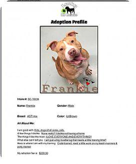 American Staffordshire Terrier Dog for adoption in Louisiana, Missouri - Frankie