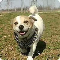 Adopt A Pet :: Fat Jack - Iowa Park, TX