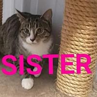 Adopt A Pet :: Sister - Colfax, IL