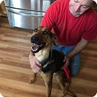 German Shepherd Dog/Hound (Unknown Type) Mix Dog for adoption in Burlington, New Jersey - Princess