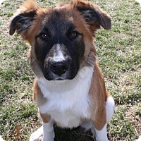 Adopt A Pet :: Gypsy - Nicholasville, KY