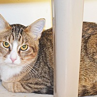 Adopt A Pet :: Whatchamacallit - Lincoln, NE