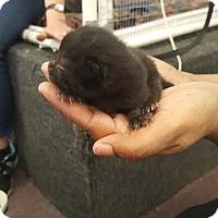 Adopt A Pet :: Memphis - Raleigh, NC