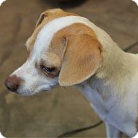 Adopt A Pet :: Ashley - Bisbee, AZ