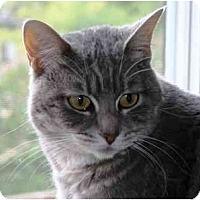Adopt A Pet :: Jemma - Portland, OR