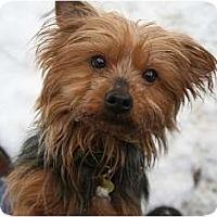 Adopt A Pet :: Blossom - Seattle, WA