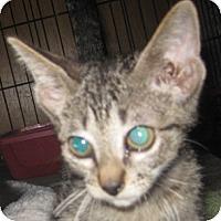 Adopt A Pet :: Graham - Dallas, TX