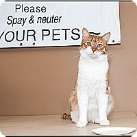 Adopt A Pet :: Buddy - Acme, PA