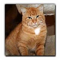 Adopt A Pet :: Puma - Howell, MI