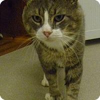 Adopt A Pet :: Earl Gray - Hamburg, NY