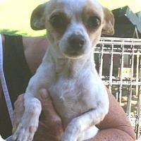 Adopt A Pet :: Sophie - Medora, IN