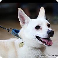 Adopt A Pet :: Simon - Oak Ridge, NJ