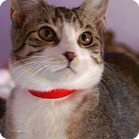 Adopt A Pet :: Simon - Englewood, FL