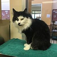 Adopt A Pet :: PAULINE - Reno, NV