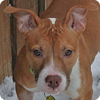Adopt A Pet :: Dancer - North Olmsted, OH
