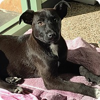 Adopt A Pet :: Daisy - Thousand Oaks, CA