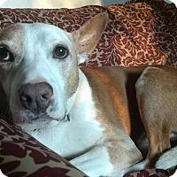 Adopt A Pet :: ELLIOT - URGENT! - Linden, NJ