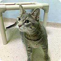 Adopt A Pet :: Jaxie - Janesville, WI