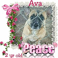 Adopt A Pet :: Ava - Winchester, CA