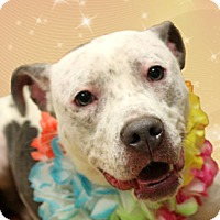 Adopt A Pet :: Marylin - Cincinnati, OH