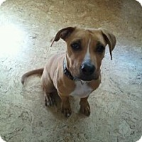 Adopt A Pet :: Dalton - Broomfield, CO