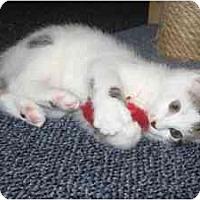 Adopt A Pet :: Ella - Milwaukee, WI