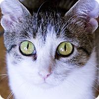 Adopt A Pet :: Claudette - Chicago, IL