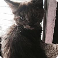 Adopt A Pet :: Vessa - Edmonton, AB