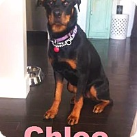 Adopt A Pet :: Chloe - Loves to exercise! - Huntsville, ON