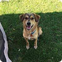 Adopt A Pet :: Chance - Saskatoon, SK