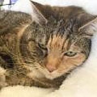 Adopt A Pet :: Melinda - Stafford, VA
