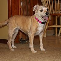 Adopt A Pet :: Macy - Pleasant Plain, OH