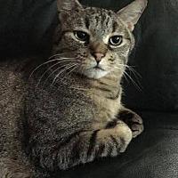 Adopt A Pet :: Dunkan - Princeton, MN